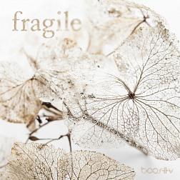 BoostTV 033 Fragile